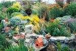 The Meditteranean feel of this garden is contributed to by a combination of drought tolerant shrubs and perennials including grasses
